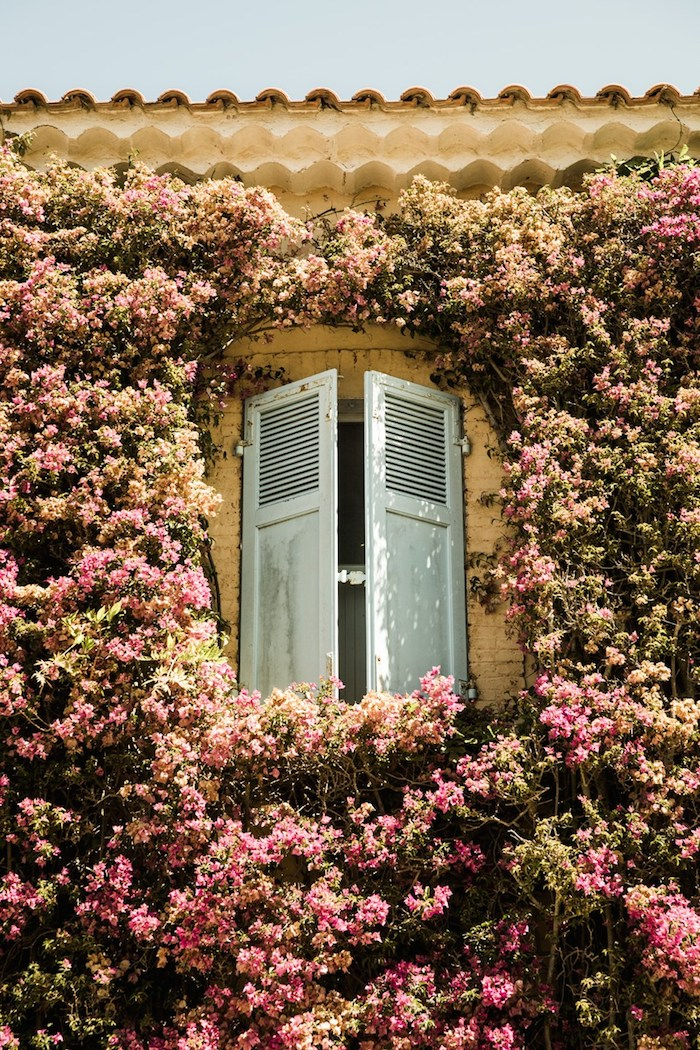 france-shutters-flowers-by-martin-morrell