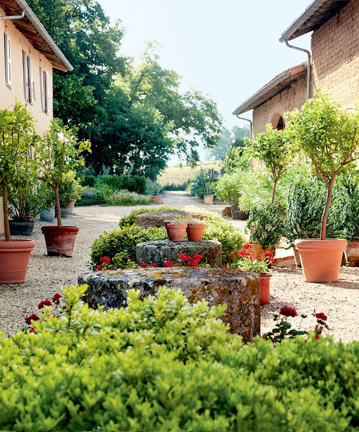 potted-lemon-trees-and-geraniums-southern-france-estate